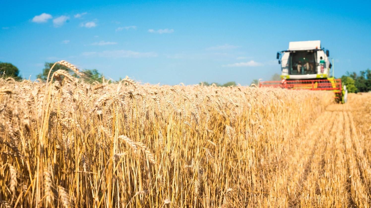 Минсельхоз РФ предоставит экспортерам в сфере АПК субсидии на сертификацию продукции для внешних рынков